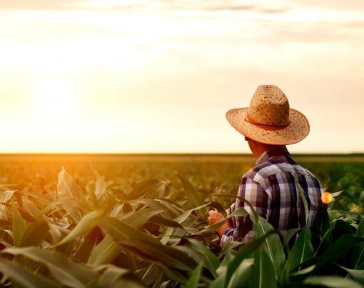 aposentadoria-trabalhador-rural-como-solicitar